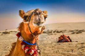 Kreditkarten für Ägypten